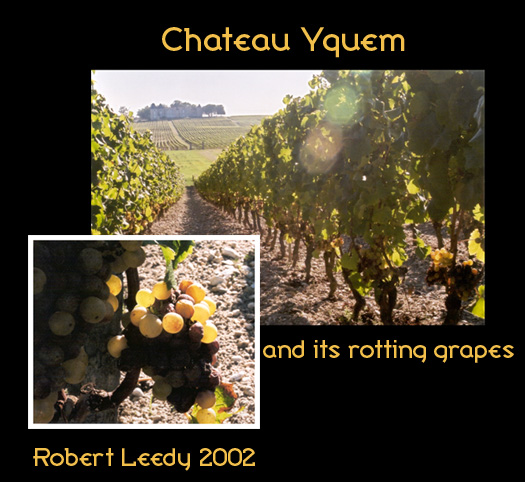 ChateauYquem