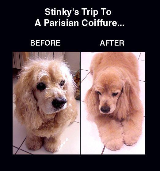 Stinky'sHaircut