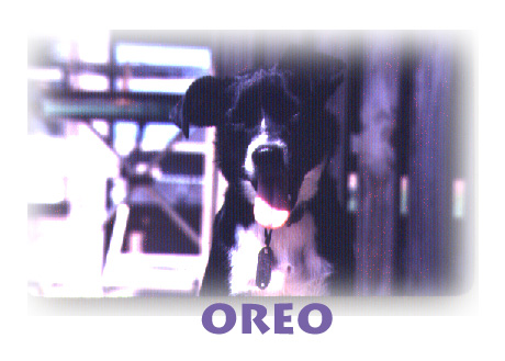 Oreo, probably around 1981, Photo by Robert Leedy