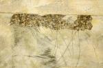 Floor Abstractions 10